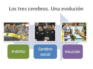 Los tres cerebros del equipo. La inteligencia colectiva de una organización viva.
