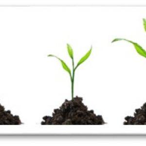 Los cuatro principios de la dirección. Solución de problemas y aprendizaje desde el talento